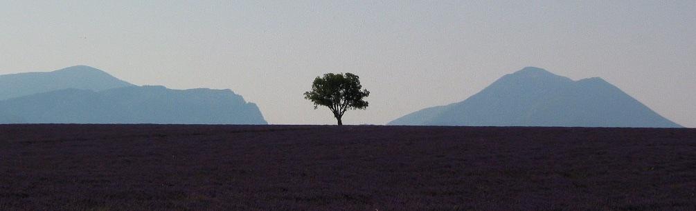 Lavender shoot Provence