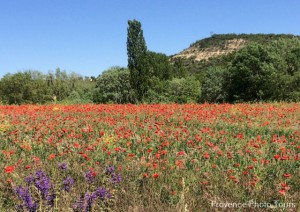Provence in May
